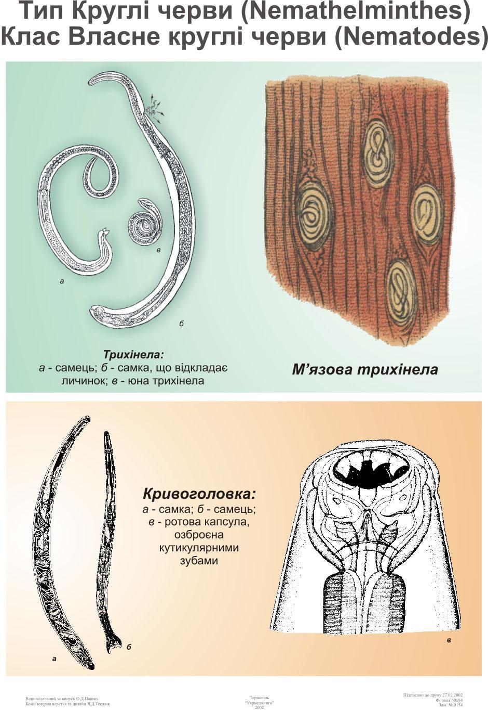 a kovaföld paraziták megtisztulnak hogyan jönnek elő férgek egy gyermekben